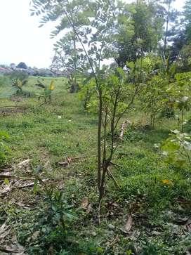 Dijual tanah kampung ramai penduduk di glu99gur rimbun psr 1 .