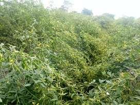 agricultural land for sale 6.5 acres