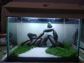 Creative Aquariums and Aquascapes