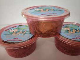 Mealworms, Shrimp E and Dried Bloodworm- High Protein Pet Food