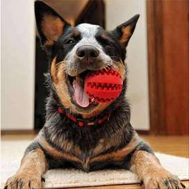 Pet Dog Toys Ball Nontoxic Bite Resistant Toy Bouncy Rubber - PS406