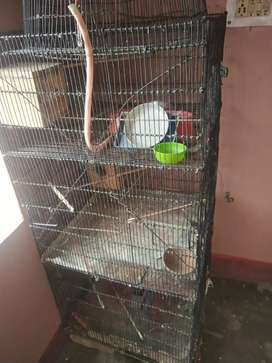CAGE of 6ft