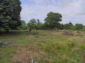 Disewakan Tanah Luas, Morowali (Bahomotefe)
