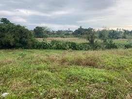 Dijual cepat tanah murah di daerah Tanjung Anom , medan ,sumatra utara