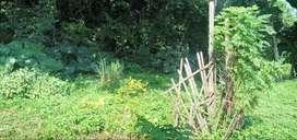 Jual tanah kavling +- 5 tumbak di Awiligar - kp. Cipariuk