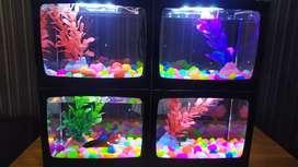 Aquarium Cupang Komplit