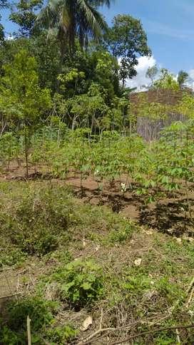 Jual tanah darat seluas 15 bt