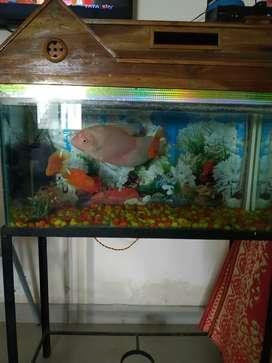 Accurium with parrot fish