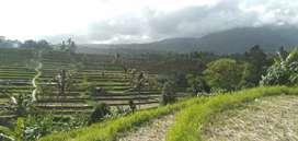Jual tanah sawah produktif dan kebun senganan jatiluwih 70are