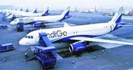new indigo company jobs , hiring long lasting candidates for various p