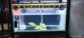 Aquarium 80x40x40 kaca 8ml