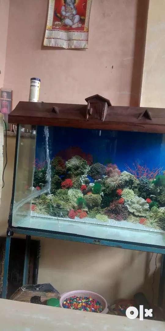 Aquarium fish urgently 0