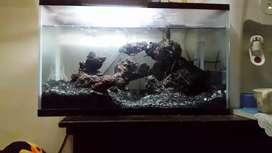 Aquarium gexx ukuran 40x30 cm