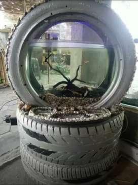 Aquarium dlm Ban
