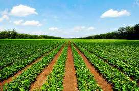 Low price Farmland available for sale near Dhamua