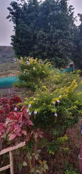 Rent plot very prime location katrap aptewadi highway