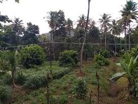 Agricultural land, Mannamangalam - Check dam Road.