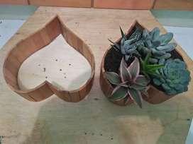 Paket tanaman cantik