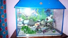 Fish aquarium with all equipments