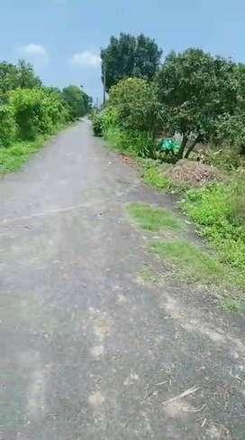 chhoi land 7.5 beegha registerd & 7 beegha non registerd