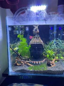 Eyepleasing Planted Aquarium for SALE