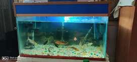 3feet Aquarium