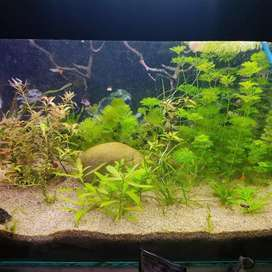 Natural plants fish aquariumb