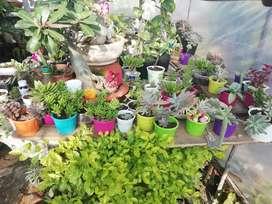 Succulent plants, hanging, etc