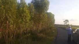 agriculture land for sales on road pariyapalayam arani