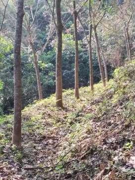 Rubber plantation for sale