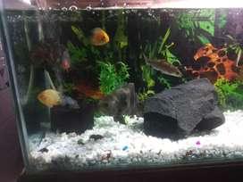 All fish aquarium saaf Safai mate
