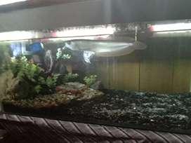 Aquarium lengkap dgan ikan dan variasinya