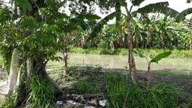 227.Dijual Disewakan Murah, Cocok ciamik Tanah daerah juanda