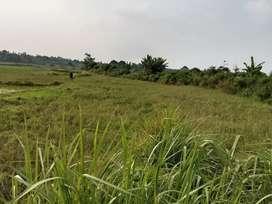 Tanah sawah kering 1810m buat invest gudang