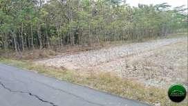 Tanah sewa Sendangmulyo Utara SMAN 1 Minggir (RI 45]