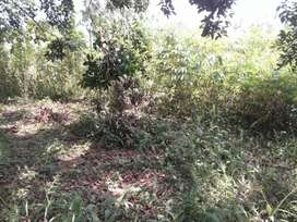Jual Cepat Tanah di Pancur Batu Dekat Jl. Raya Hanya 200 Juta
