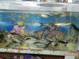 All fish variety's for sell