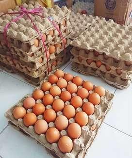 Telur Fresh Barelang