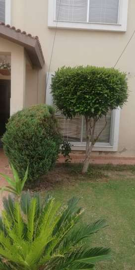 5 MARLA FUULY FURNIHED HOUSE FOR RENT