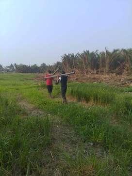 Tanah Dijual Lokasi Serang Banten LT.1,7 HA