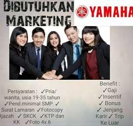 Marketing Yamaha