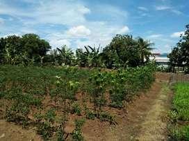 Tanah Darat SHM