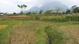 Tanah SHM Ngoro Mojokerto View Gunung  Penanggungan
