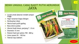Benih Bibit Cabai Rawit Putih Merunduk Jaya Urban Farming Jayaseeds
