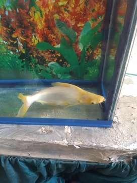 My fish sell