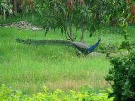 300 sqmtr plot in Succoro, Porvorim North Goa.  78873.98222