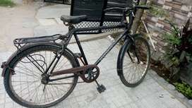 Adult size bicycle
