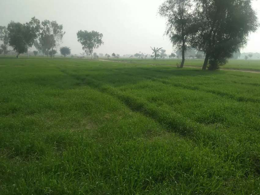 20 Acre Army allotted agriculture land 0
