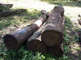 Rosewood Logs Supplier in Bangalore.