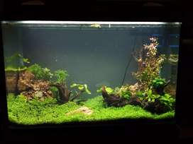 Well Planted tank
